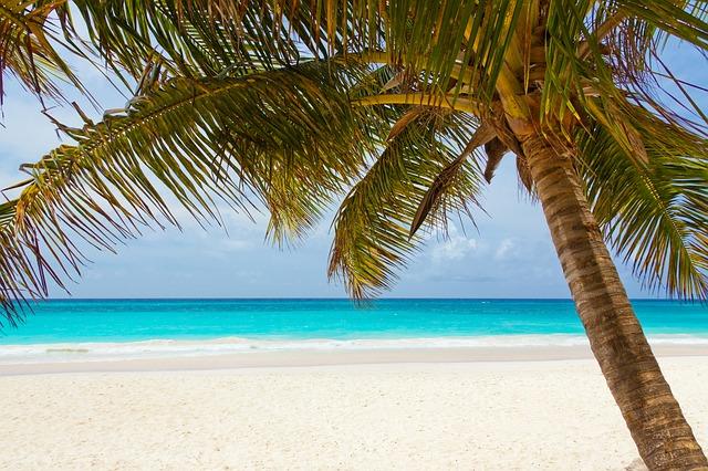 palma na pláži.jpg