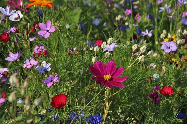 květiny na louce.jpg