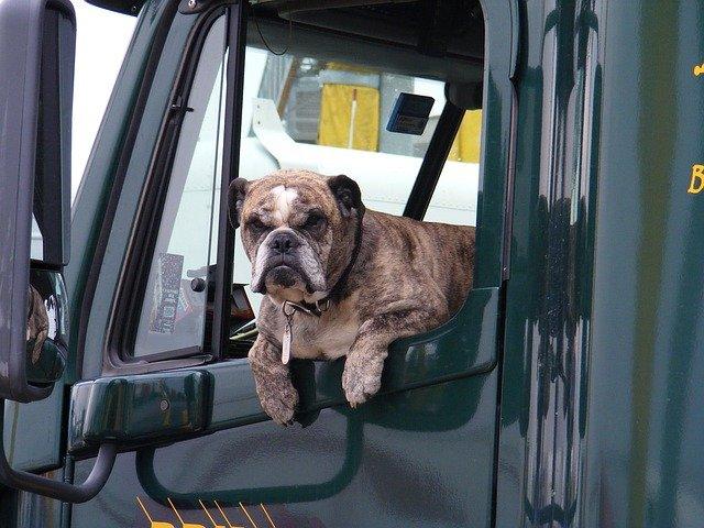 pes v náklaďáku