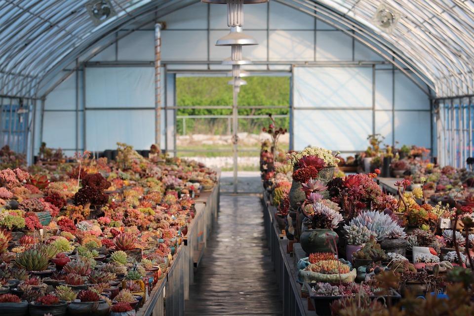 skleník s kaktusy